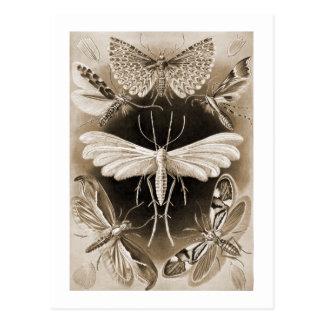 Motten Postkarte