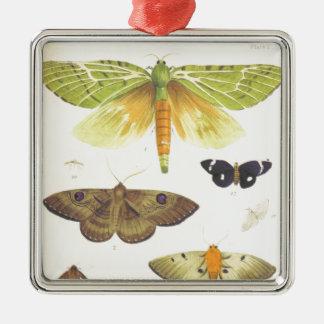 Motten und Schmetterlinge von Neuseeland Silbernes Ornament
