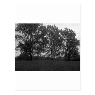 Mountview Park-Dreiergruppen Postkarte