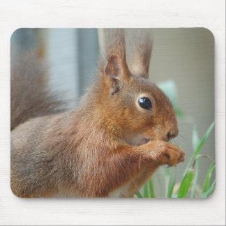 Mousepad Eichhörnchen Squirrel Écureuil