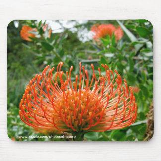 Mousepad - Protea-Button-Kissen-Blume