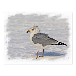 Möve im Schnee Postkarte