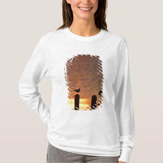 Möven auf Anhäufungen in Laguna Madre, SüdPadre T-Shirt