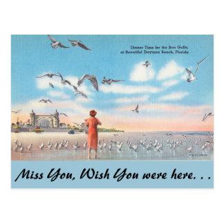 Möven Floridas, Meer, Daytona Beach Postkarte