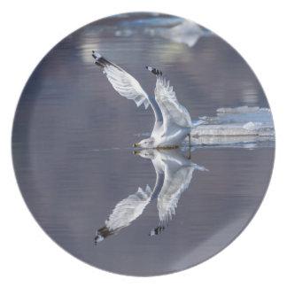 Möven-Reflexionen Teller