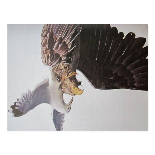 Möwe und Adler- Postkarte