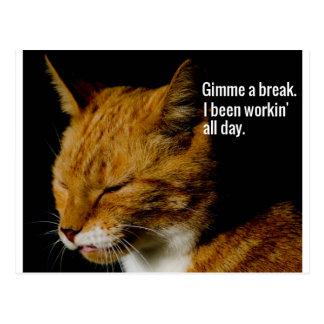 """Müder Katzen-Entwurf - """"Gimme ein Bruch. """" Postkarte"""