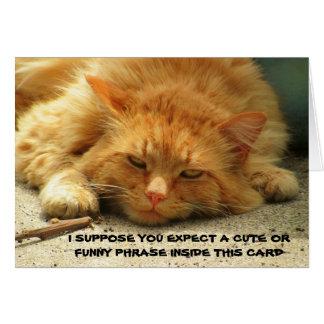 Müder Kitty will Sie, um seine Karte zu beenden