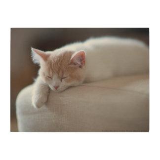 Müdes beige und weißes Kätzchen Holzwanddeko