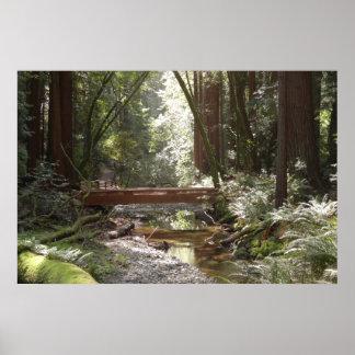 Muir Holz-Brücke II Poster