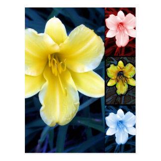 Multi Blume - Blumenpostkarte Postkarte