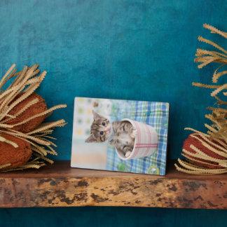 Munchkin Kätzchen mit hübschem Band Fotoplatte