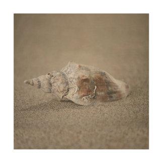 Muschel auf Sand Holzleinwand