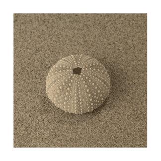 Muschel auf Sand Holzwanddeko