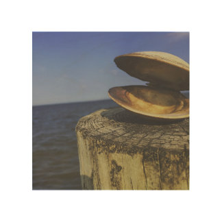 Muschel durch das Meer Holzwanddeko