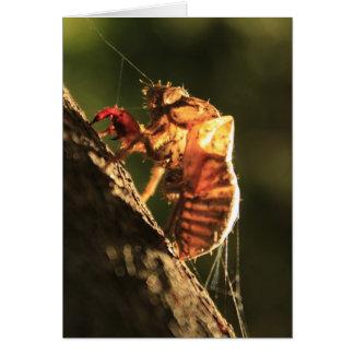Muschel einer Zikade Karte