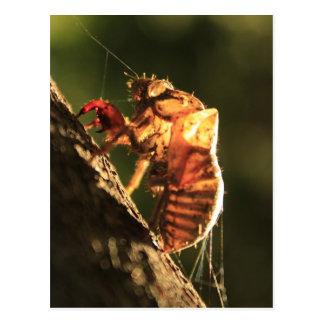 Muschel einer Zikade Postkarte