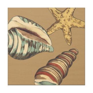 Muschel-Trio auf kakifarbigem Holzleinwand