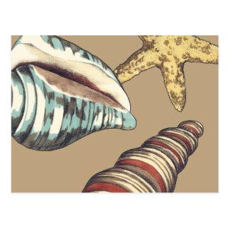 Muschel-Trio auf kakifarbigem Postkarte