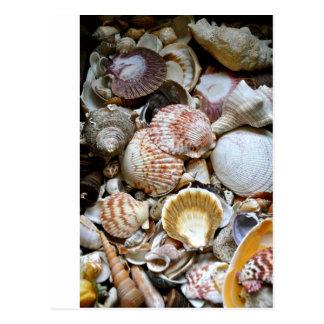 Muschel-Vielzahl Postkarte