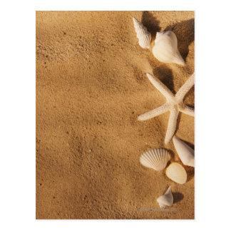Muscheln auf Sand Postkarte