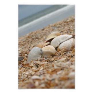 Muscheln auf Strandphotographie fantasiereichen Fotodruck