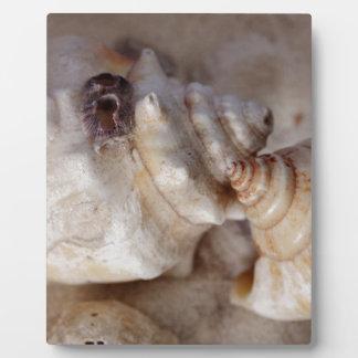 Muscheln Fotoplatte
