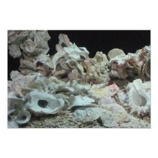 Muscheln & Korallen Fotodruck