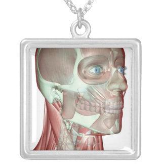 Musculoskeleton des Kopfes und des Halses 5 Versilberte Kette