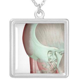 Musculoskeleton des Kopfes und des Halses 8 Versilberte Kette