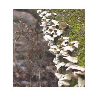 mushroom_downed tree_moss_winter notizblock