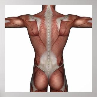 Muskel des Mannplakats Poster