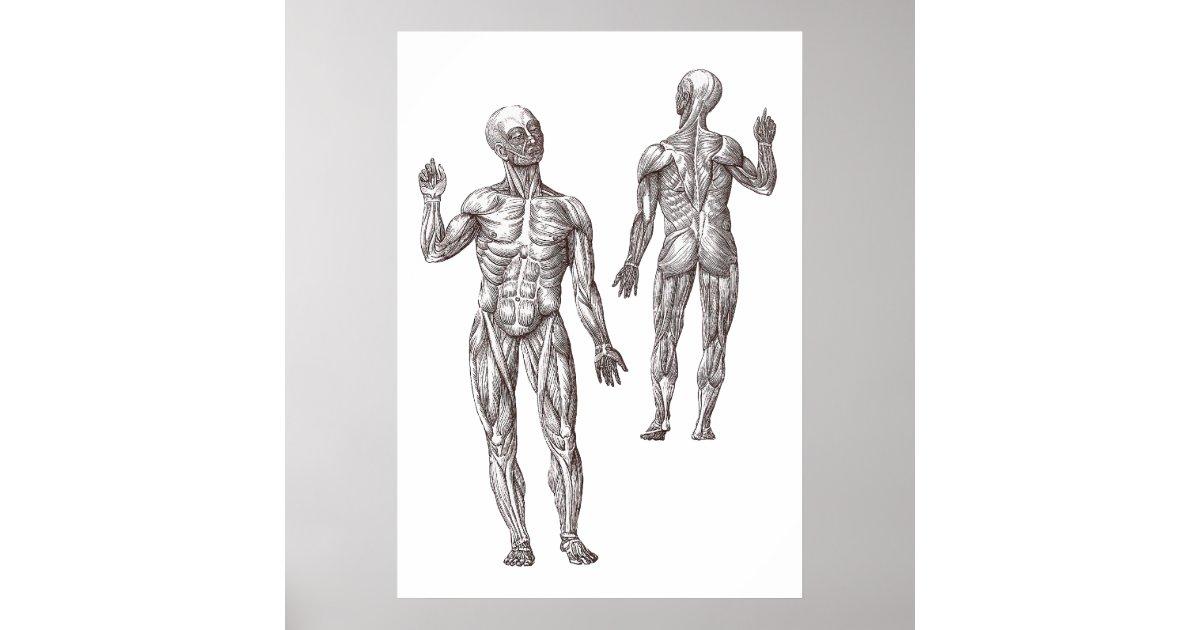 Atemberaubend Muskelanatomie Poster Galerie - Anatomie Von ...