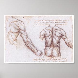 Muskeln der Rückseite, Leonardo da Vinci Poster
