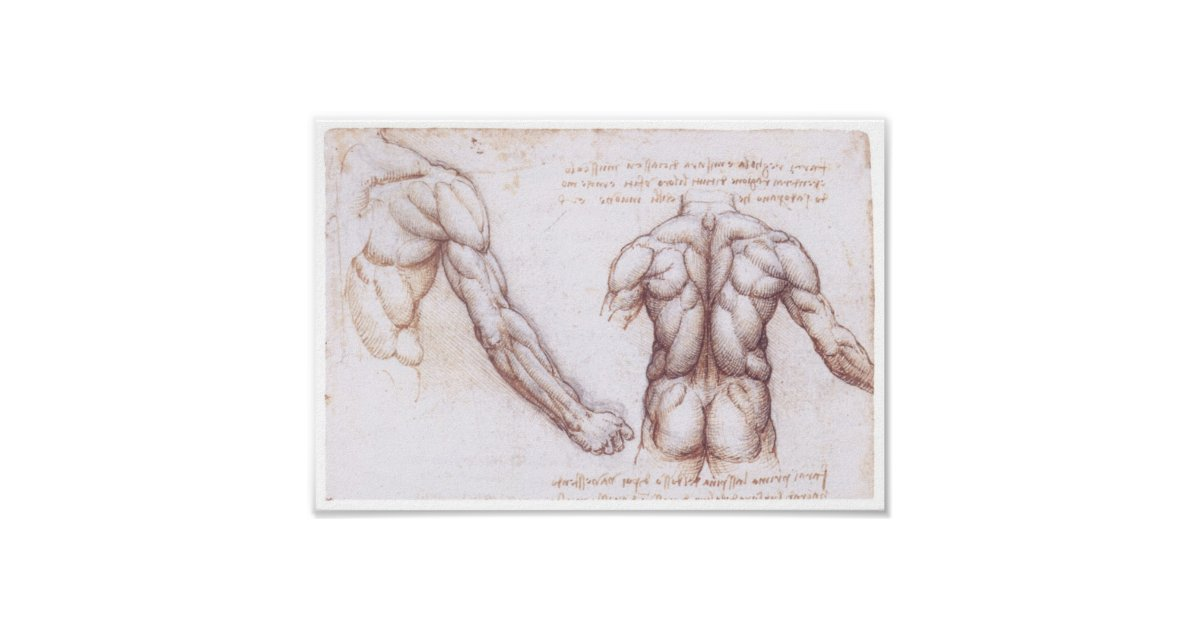 Muskeln der Rückseite, Leonardo da Vinci Poster | Zazzle