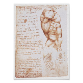 Muskeln des Torsos, Leonarod da Vinci Poster