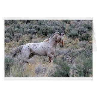 Mustang Copperhead Karte