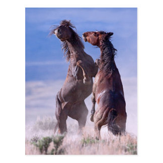 Mustang-Kampf 2 Postkarte
