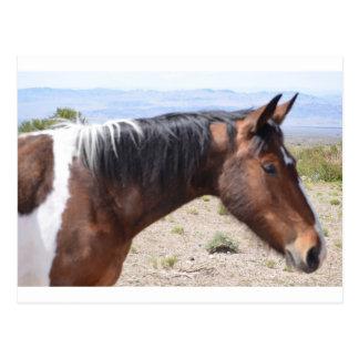 Mustang Postkarte