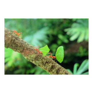 Mutige vibrierende lustige Leafcutter Ameisen in Poster