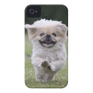 Mutiger Kasten des Pekingese HundeBlackBerry, nied Case-Mate iPhone 4 Hülle