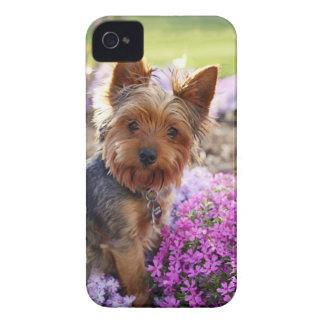 Mutiger Kasten des Yorkshire-Terrierhundeniedliche iPhone 4 Case-Mate Hüllen
