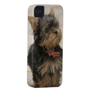 Mutiger Kasten des Yorkshire-Terrierhundeniedliche iPhone 4 Case-Mate Hülle