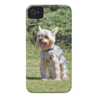 Mutiger Kasten des Yorkshire-Terrierhundeniedliche iPhone 4 Cover