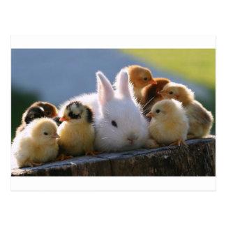 Mutter-Kaninchen adoptiert einige Küken Postkarte