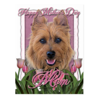 Mutter-Tag - rosa Tulpen - australisches Terrier Postkarte