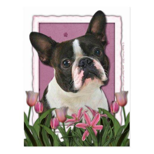 Mutter-Tag - rosa Tulpen - Boston Terrier Postkarte