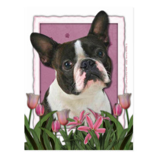 Mutter-Tag - rosa Tulpen - Boston Terrier Postkarten