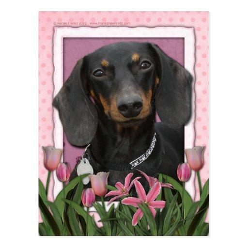 Mutter-Tag - rosa Tulpen - Dackel - Winston Postkarte