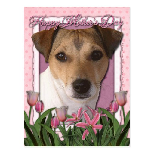 Mutter-Tag - rosa Tulpen - Jack Russell Postkarte
